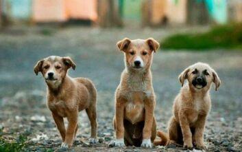 ΚΕΔΕ: Αναρτήθηκε νέα βεβαίωση μετακίνησης για τη σίτιση αδέσποτων ζώων
