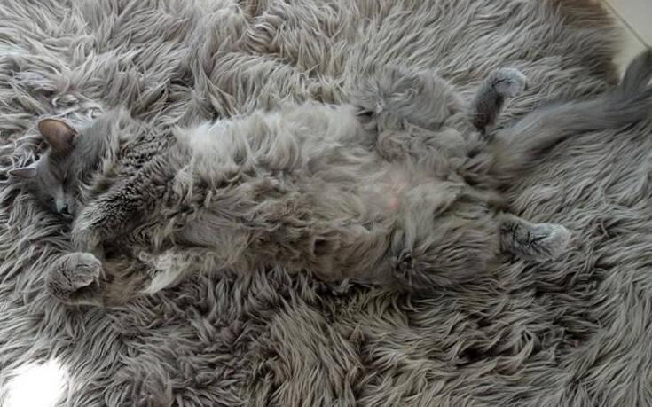 Ζώα άσοι στο καμουφλάζ