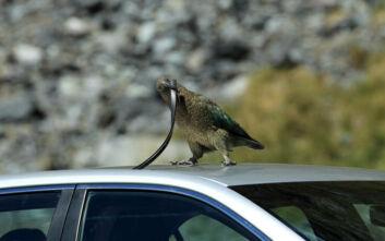 Είσαι σίγουρος ότι είσαι πιο έξυπνος από αυτό το… πουλί;