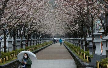 Μόνο στο διαδίκτυο, φέτος, η απόλαυση των ανθισμένων κερασιών στην Ιαπωνία