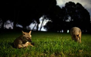 «Η περιφρόνησή μας για τη φύση και η έλλειψη σεβασμού για τα ζώα οι αιτίες αυτής και των επόμενων πανδημιών»