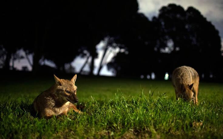 «Η περιφρόνησή μας για τη φύση και η έλλειψη σεβασμού για τα ζώα οι αιτίες αυτής και των επόμενων πανδημιών» 1