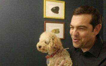 Καραντίνα παρέα με τη σκυλίτσα του ο Αλέξης Τσίπρας