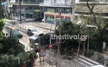 Καιρός: Πτώση δέντρου στην Καλαμαριά - Έκοψε καλώδια της ΔΕΗ