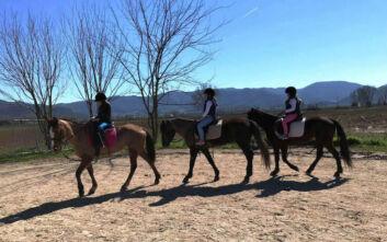 Νέο περιστατικό δηλητηρίασης αλόγου, αυτή τη φορά στη Δράμα - Σε συναγερμό οι τοπικές αρχές