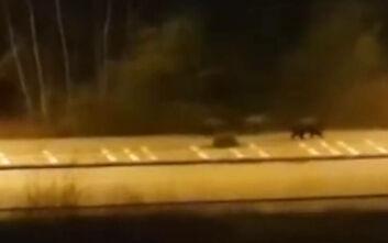 Αρκούδες κόβουν βόλτες στους άδειους λόγω «καραντίνας» δρόμους της Καστοριάς