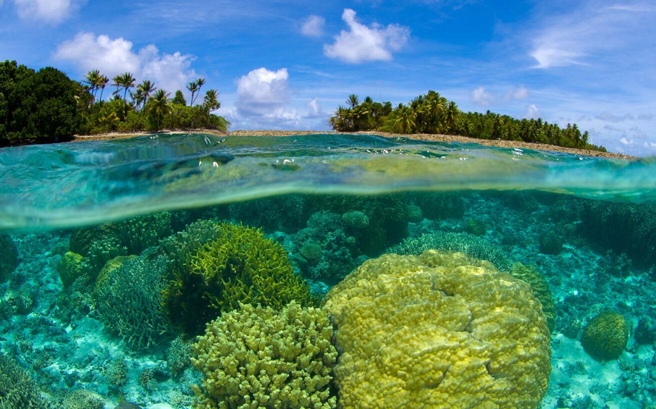 O τροπικός παράδεισος όπου οι αδηφάγοι καρχαρίες είναι το μικρότερο από τα προβλήματά σου