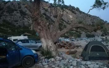 Καταγγελία ότι έκοψαν δέντρα στην Κρήτη για να αποτρέψουν το ελεύθερο camping