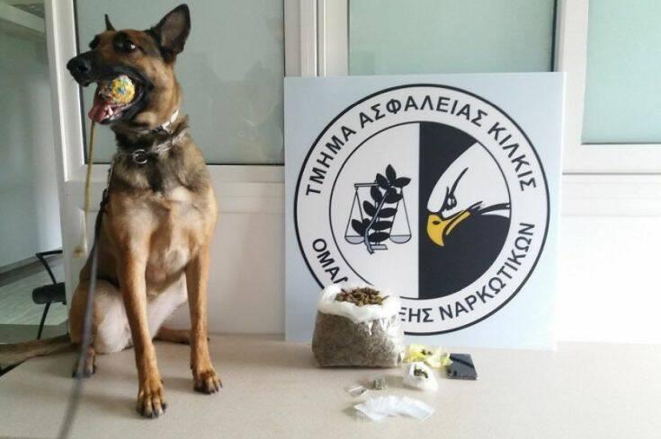 Θεσσαλονίκη: Η Minnie εντόπισε περισσότερα από 600 γραμμάρια κάνναβης 1