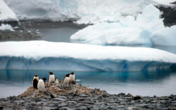Η κλιματική αλλαγή κάνει... πράσινη την Ανταρκτική