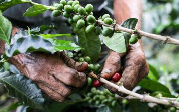 Πώς ο κορονοϊός απειλεί την εξαγωγή καφέ από την Κολομβία