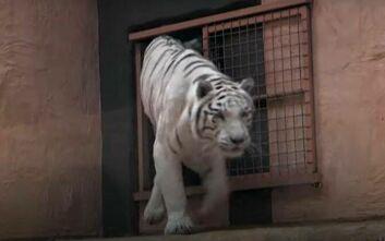 Ζωολογικός κήπος στην Ουκρανία δεν έχει πλέον έσοδα να φροντίσει τα ζώα του λόγω κορονοϊού