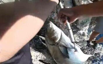 Με το στόμα ανοικτό έμειναν δύο ερασιτέχνες ψαράδες όταν έβγαλαν «λίτσα» 24 κιλών – Δείτε το βίντεο της «μάχης» με το ψάρι