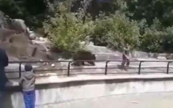 Μεθυσμένος άνδρας προσπάθησε να πνίξει αρκούδα σε ζωολογικό κήπο