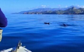 Υπέροχες εικόνες με δελφίνια να κολυμπούν κοντά στο λιμάνι της Νάξου