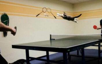 Γνώριμες εικόνες αν έχεις γάτα