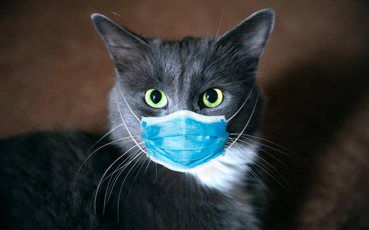 Οι γάτες μπορούν να κολλήσουν κορονοϊό από τον άνθρωπο – Τι ισχύει για το αντίστροφο