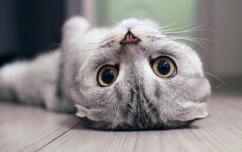 Γαλλία: Γάτα «πάλεψε» με τον κορονοϊό και βγήκε νικήτρια