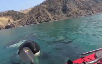 Τρομακτικό βίντεο με φάλαινες-δολοφόνους που πλησίασαν δύο άνδρες σε καγιάκ