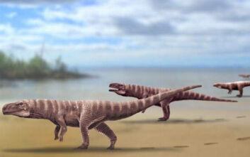 Οι κροκόδειλοι πιθανώς κάποτε περπατούσαν στα δύο πόδια