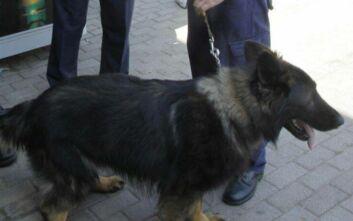 Ειδικά εκπαιδευμένος σκύλος στην επιχείρηση για τον εντοπισμό του 54χρονου στον Υμηττό
