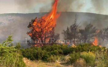 Τεράστια μάχη με τις φλόγες στο Μαρτίνο – Βίντεο από τη φωτιά να «καταπίνει» δέντρα