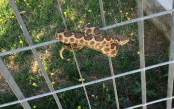 Θεσσαλονίκη: Φίδι σκόρπισε τον τρόμο σε παιδική χαρά