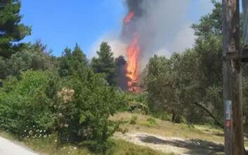 Μεγάλη φωτιά στην Εύβοια και κινητοποίηση από την Πυροσβεστική - Εικόνες από το σημείο