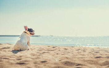 Τα σκυλιά που κινδυνεύουν περισσότερο από τη θερμοπληξία