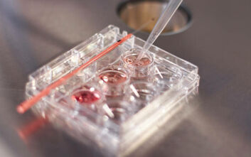 Το σενάριο, ώστε να μην πεταχτούν στα σκουπίδια, χιλιάδες κρυοσυντηρημένα γονιμοποιημένα ωάρια