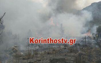 Μεγάλη φωτιά τώρα στις Κεχριές Κορινθίας: Πληροφορίες για εκκένωση οικισμών και κατασκήνωσης