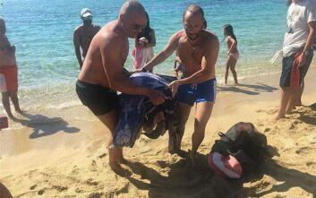 Χελώνα καρέτα - καρέτα βγήκε τραυματισμένη στη στεριά στο λιμανάκι της Αγίας Άννας στη Νάξο