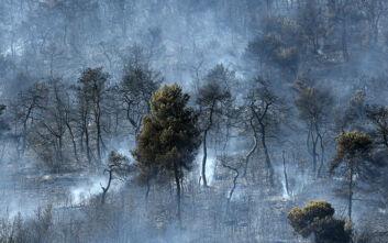 Πυροσβεστική: 37 δασικές πυρκαγιές σημειώθηκαν το τελευταίο 24ωρο