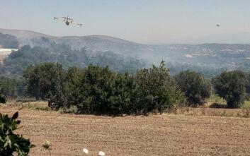 Φωτιά στη Λέσβο: Συνεχίζεται η μάχη με τις φλόγες στα βουνά της Θερμής