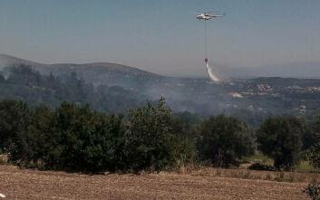 Φωτιά τώρα στην Αγία Τριάδα Λέσβου - Μεγάλη κινητοποίηση της Πυροσβεστικής