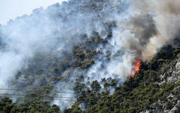 Φωτιά στις Κεχριές: Εισήγηση για εκκένωση του Σοφικού – Σε κατάσταση έκτακτης ανάγκης η ανατολική Κορινθία