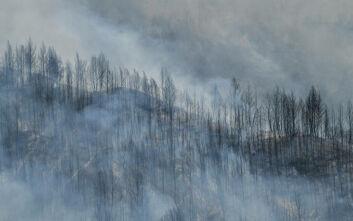 Πυροσβεστική: 48 δασικές πυρκαγιές εκδηλώθηκαν το τελευταίο 24ωρο
