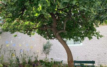 Εικόνες από πρώτο πάρκο τσέπης στην Αθήνα - Βρίσκεται στην Άνω Κυψέλη