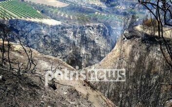 Θλιβερές εικόνες στα χωριά της Ολυμπίας: Στάχτη και καμμένη γη άφησε πίσω της η μεγάλη φωτιά