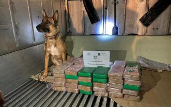 ΑΑΔΕ: Εντόπισε 70 κιλά κοκαΐνη μέσα σε φορτίο με «μπανάνες»