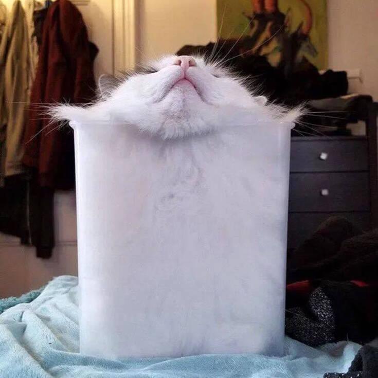 Η απόδειξη ότι οι γάτες που χωράνε παντού