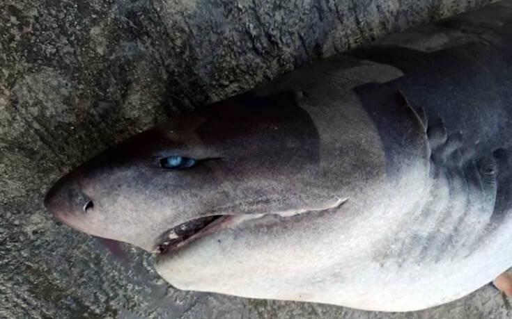 Ψαράδες έβγαλαν καρχαρία στη στεριά με γερανό