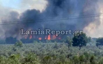 Τέθηκε υπό έλεγχο η φωτιά στο Θεολόγο - Άνοιξε και ο δρόμος