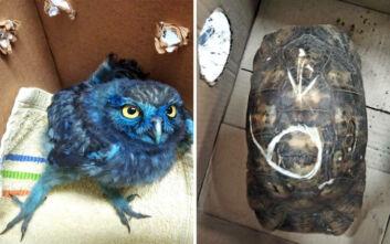 Εικόνες ντροπής: Έβαψαν κουκουβάγια με μπογιά από παιδικό πάρτι και κακοποίησαν χελώνες