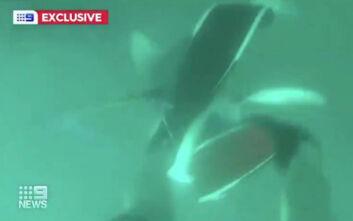 Η στιγμή που ψαροντουφεκάς κλωτσάει έναν καρχαρία στο κεφάλι για να σωθεί