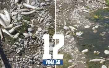 Ρόδος: Δεκάδες νεκρά ψάρια ξεβράστηκαν στην όχθη του ποταμού Κρεμαστής