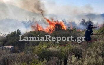 Μεγάλες φωτιές σε Βοιωτία και Φθιώτιδα – Απειλήθηκε πευκοδάσος