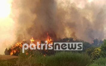Φωτιά στο Γραμματικό: Ενισχύονται οι δυνάμεις της Πυροσβεστικής - Εικόνες από το σημείο