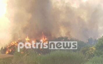 Φωτιά τώρα στην Ηλεία – Μεγάλη κινητοποίηση της Πυροσβεστικής