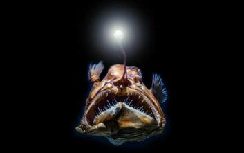 Τα ψάρια της Αβύσσου έχουν ένα μυστικό για να περνούν απαρατήρητα
